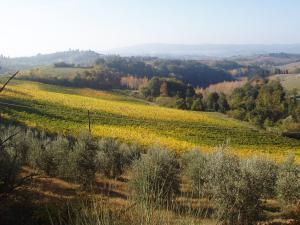 Olive trees & autumn vines below our villa. Photo J Finnigan