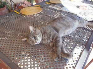 Farty Barty exhausted after laying the table. Photo J Finnigan