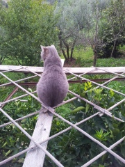Farty Barty guards the villa on top of the trellis over the Orange Trees. Photo J Finnigan