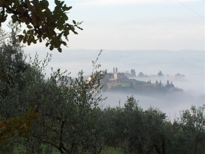 OLive trees overlooking thefog filled valleys. Photo P Finnigan