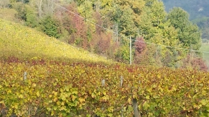 Autmn colour in the vineyards below the villa Photo P Finnigan