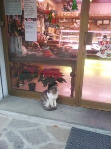 Giorgio waits to be noticed, his paw slightly raised.