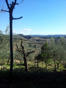 The view last Wednesday, having moved into the shade with my hot Chianti. Photo J Finnigan