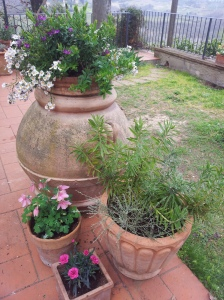 Cluster of planted pots on the upper terrace. Photo J Finnigan