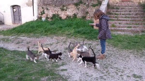 Our granddaughter feeds the church cats. Photo P Finnigan