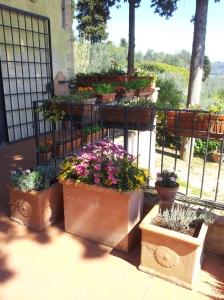 Flowering Pots on the upper terrace. Photo J Finnigan