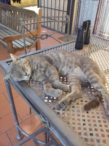 A Cool Cat - FArty Barty on the outside table. Foto J Finnigan