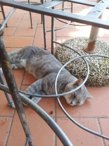 Farty Barty zonked out under the garden table. Photo J Finnigan