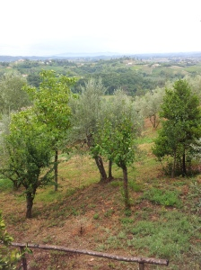 The orchard and valley below our villa under grey skies. Photo J Finnigan