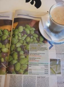 Olives and cold pressed oil. La Nazione.