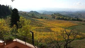 autumn Vines through Paolo's window. Photo J finnigan