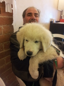 Bianco the big white puppy. Photo J Finnigan