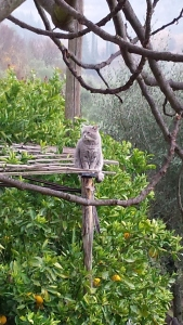Farty Barty on a favourite perch over the orange trees. Foto P Finnigan