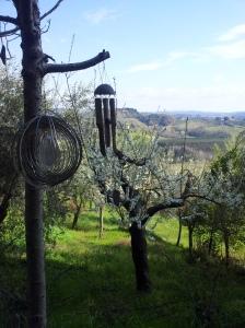 Apple bossom and the green valleys below us. Foto J Finnigan