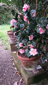 One of hundreds of flowering pots. Photo P Finnigan
