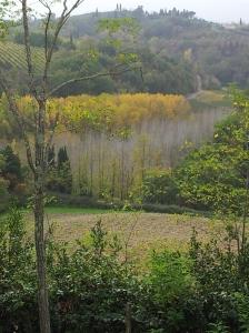 Autumn valley below our house. Foto J Finnigan