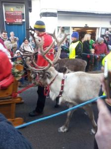 Parade of Reindeer in Wells Somerset England. Foto J Finnigan