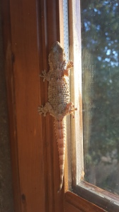 Izzy Lizard catches the sun. Foto P Finnigan