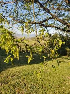 Catkins on oak April 2020