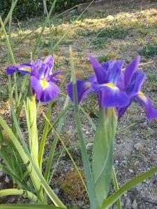 Fiorentina Iris march 2020