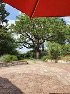 Big oak tree and brolly